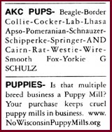 classified ads for puppies