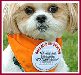 Bentley the puppy mill pup proudly wears his NO Puppy Mills! button at a pet shop protest.