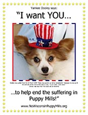 Dooley the mill auction throw-away wants YOU to help stop the suffering in puppy mills.