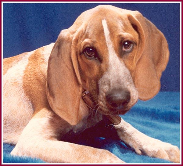 Wisconsin Puppy Mill Project photo album, Henrietta's Story