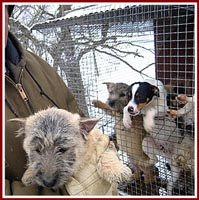 Puppies living in an outside wire cage in the cold winter.