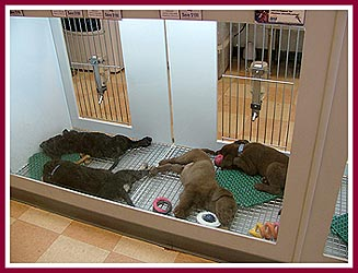 Wisconsin Puppy Mill Project, Inc : Petland Pet Store in