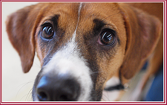 The Wisconsin Puppy Mill Project: SUPPORT legislation to