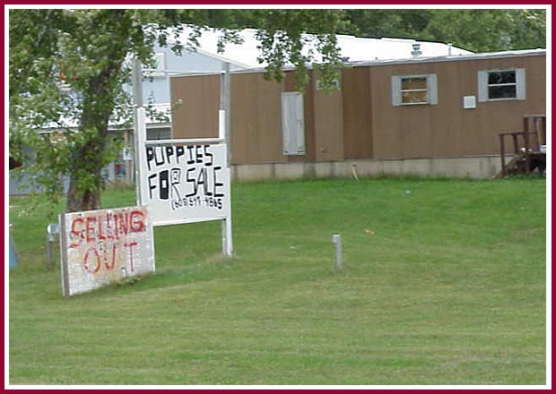 wisconsin puppy mill photo album the signs are everywhere