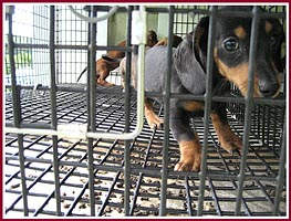 Close-up of the wire cages the pups were kept in. Note how the paws are splayed to keep from going through the mesh.