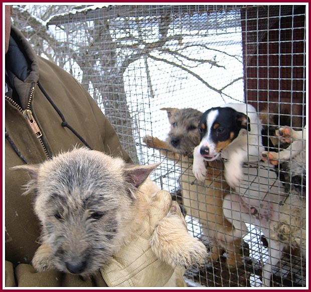 Wisconsin Puppy Mill Project, Inc : Wisconsin Puppy Mill