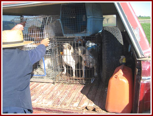 Wisconsin Puppy Mill Project photo album, Amish miller