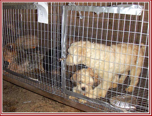 The Wisconsin Puppy Mill Project: Dog Auctions