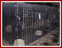 "It is almost too dark to see the dogs waiting in cages at the 2 June 2007 auction at Horst Stables in Thorp, WI. These animals were from a MI ""Kennel liquidation,"" and many of them went from one puppy mill to another via the auction."